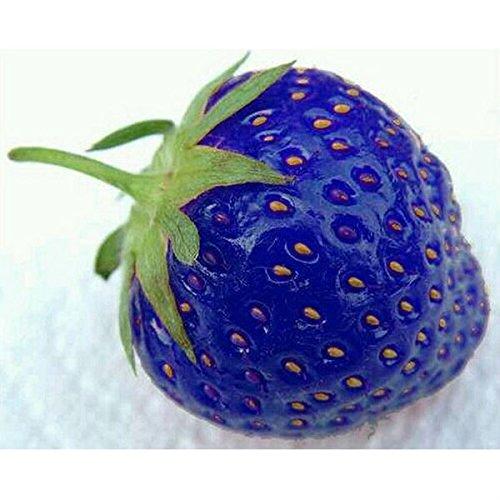 Fresas azules (100 semillas)