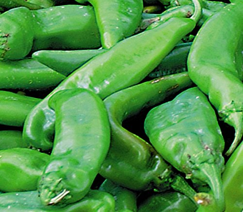 4 Lb. Fresh Premium Hatch Green Chile Peppers, Medium Flavor (New Mexican Green Chili compare prices)
