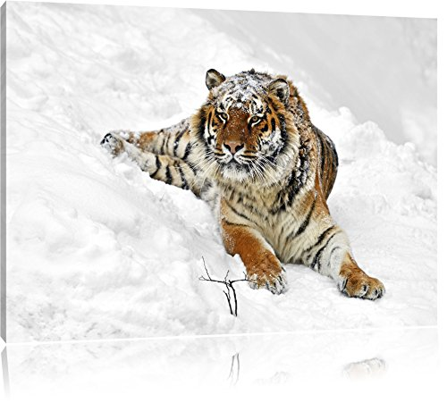 Tigre de l'Amour dans la neige Noir / Blanc, Taille: 120x80 sur toile, XXL énormes Photos complètement encadrée avec civière, impression d'art sur murale avec cadre, moins cher que la peinture ou une peinture à l'huile, pas une affiche ou une bannière,