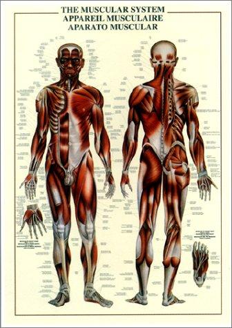 筋肉組織 [ポスター]
