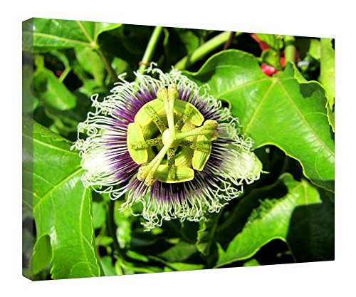 iRocket Canvas Prints Wall Art - Passion Fruit - Wood Board Background Stretched Canvas Wrap Ready To Hang For Home And Office Decoration - 20