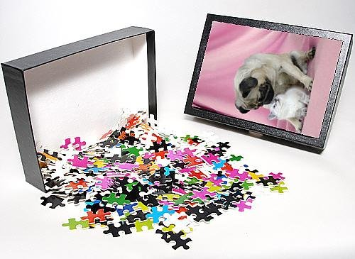 Photo Jigsaw Puzzle Of Dog. Pug With A Kitten On Pink Background front-995039