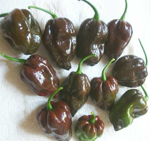 CHOCOLATE HABANERO HOT PEPPER 25 SEEDS