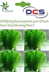 DCS (048) Spring Bonsai aquarium grass 10 Seeds Green Novel Blooming Plant-9