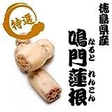 季節の高級野菜 徳島県産 秀品 れんこん 3kg箱