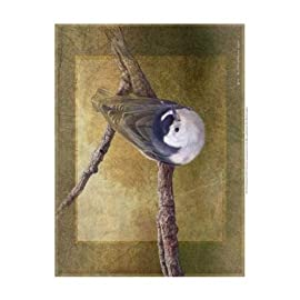 Nuthatch Poster Print by Chris Vest (13 x 19)