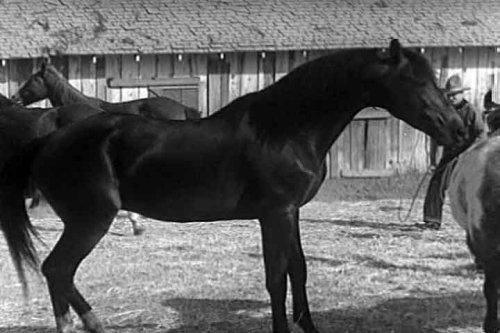 Santa Anita Horse Racing Film: The Long Shot (1939) [DVD] - A Thoroughbred Breeders Race Horse Film Starring Gordon Jones & Marsha Hunt by Gordon Jones