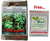 SEED Seller: Rare & precious Aegle marmelos Seeds for growing. Fruit-bearing, an important Medicinal plant and a Sacred tree of India known as Bael, Vilvam, Koovalam, Bengal quince, Golden apple, Japanese bitter orange (100)
