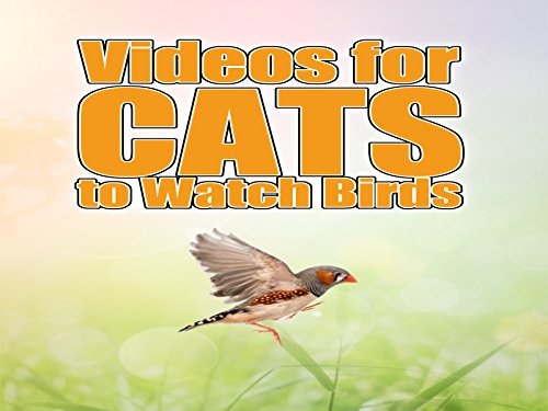 Videos for Cats to Watch Birds - Season 1