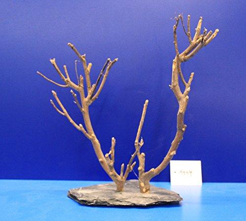 Eau-Flora-2-Fein-Dcor-en-sapin-sur-ardoise-27-x-27-x-12-1114-sur-plateau-ardoise