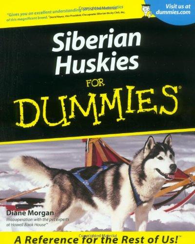 Miniature Siberian Husky Puppies For Sale Miniature Siberian Husky