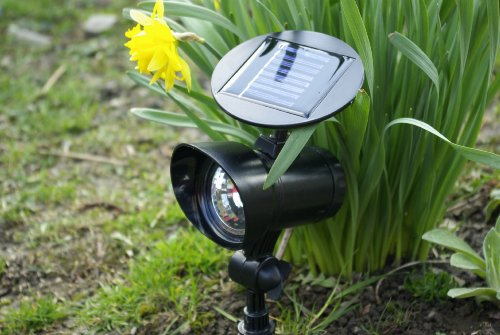 """Solar-Strahler """"Spot-light"""