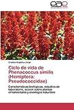 Ciclo de vida de Phenacoccus similis (Hemiptera: Pseudococcidae): Características biológicas, estudios de laboratorio, acción sobre plantas ornamentales y enemigos naturales (Spanish Edition)