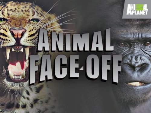 Animal Face Off: Season 1