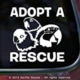 ADOPT A RESCUE PARROT Macaw Amazon Conure Bird Love Parrots Vinyl Decal Sticker Car Window Door Wall Sign WHITE