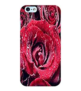 ColourCraft Lovely Roses Design Back Case Cover for APPLE IPHONE 6S