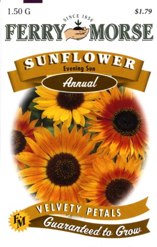 Ferry-Morse 1501 Sunflower Annual Flower Seeds, Evening Sun (1.5 Gram Packet)