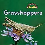 Grasshoppers-Benchmark-Rebus