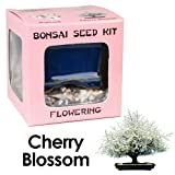 Eves Cherry Blossom Bonsai Seed Kit, Flowering, Complete Kit to Grow Cherry Blossom Bonsai from Seed