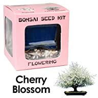 Eve's Cherry Blossom Bonsai Seed Kit,…