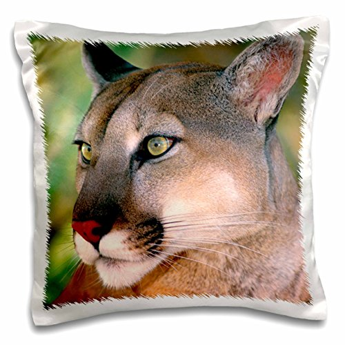 Danita Delimont - Lions - California, Mountain lion, Wildlife Waystation - US05 BJA0224 - Jaynes Gallery - 16x16 inch Pillow Case (pc_88204_1)