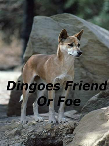 Dingoes Friend Or Foe
