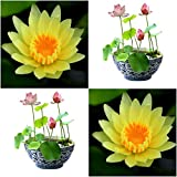(Combo Of 2 Colors) Floral Treasure YELLOW & PINK Lotus Seeds - Pack Of 10