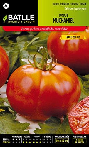 semillas-batlle-tomate-muchamiel
