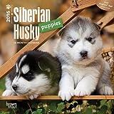 Siberian Husky Puppies 2016 Mini 7x7 (Multilingual Edition)