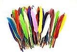 ノーブランド品 染め羽根 100枚 ガチョウの羽 10-15CM 工芸品 DIY 装飾用の羽根 多色