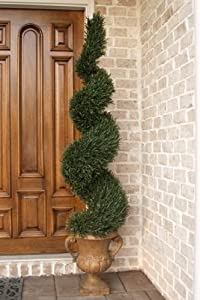 5′ Rosemary Spiral Topiary w/2184 Lvs. in Plastic Pot Green