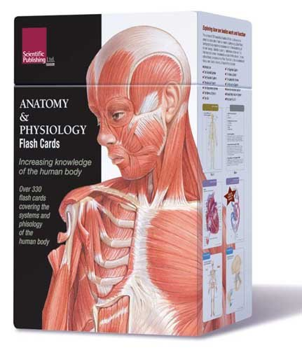 Anatomy Flash Cards---