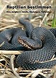 Image de Reptilien bestimmen: Eier, Jungtiere, Adulte, Häutungen, Totfunde (Zeitschrift f. Feldherpetologie