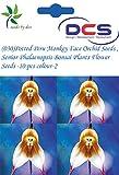 (030) Potted Peru Monkey Face Orchid Seeds,Senior Phalaenopsis Bonsai Plants Flower Seeds -10 pcs Colour-2