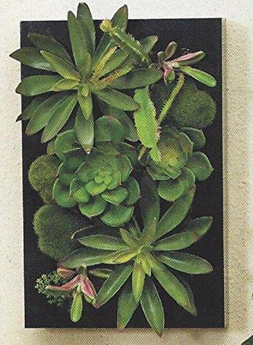 3D Artificial Succulents Wall Garden In Black Frame Home