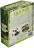Dunecraft Grow Your Own Lily Pad Science Kit