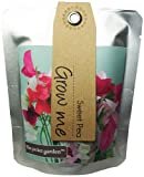 The Pocket Garden Sweet Pea Plants Seeds