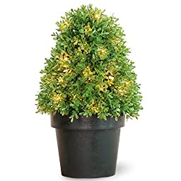 National Tree LBX4-300-15-1 Boxwood Tree with Dark Green Growers Pot with and 35-Clear Lights, 18-Inch