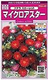 サカタのタネ 実咲花5042 マイクロアスター ステラ スカーレット 00905042