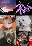 img - for Retiring in Costa Rica Or Doctors, Dogs and Pura Vida book / textbook / text book