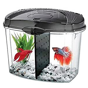 Aqueon betta bowl fish tank starter kit for Betta fish tanks amazon