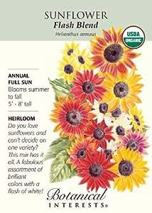 Heirloom Sunflower Seeds Flash Blend Certified Organic