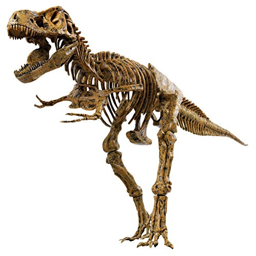 edu-science-t-rex-skeleton-36-scale-replica-model