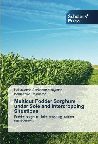 Multicut Fodder Sorghum under Sole and Intercropping Situations: Fodder sorghum, Inter cropping, ratoon management PDF