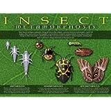 Entomology - Insect Metamorphosis Poster