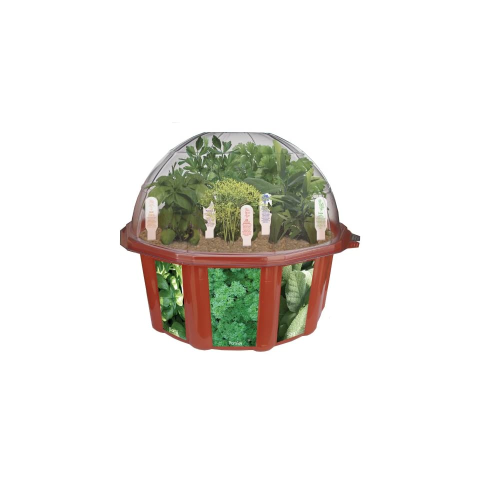 Amazoncom indoor culinary herb garden starter kit start growing rachael edwards - Indoor herb garden starter kit ...