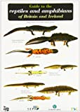 Guide to the Reptiles and Amphibians of Britain and Ireland (Occasional Publications)