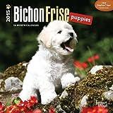 BT Bichon Frise Puppies 2015 Mini