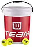 Wilson - Team Trainer