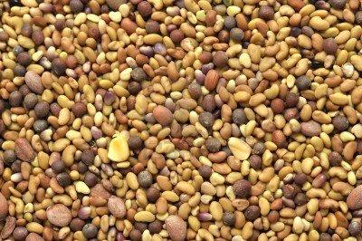 Salad Mix Of Sprouting Seeds: Broccoli Clover Radish Alfalfa - 3 Pounds